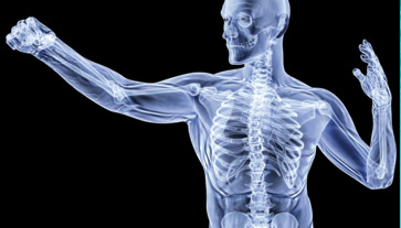 concetto salute delle ossa